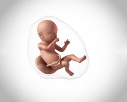 Hamileliğin 40. Haftası